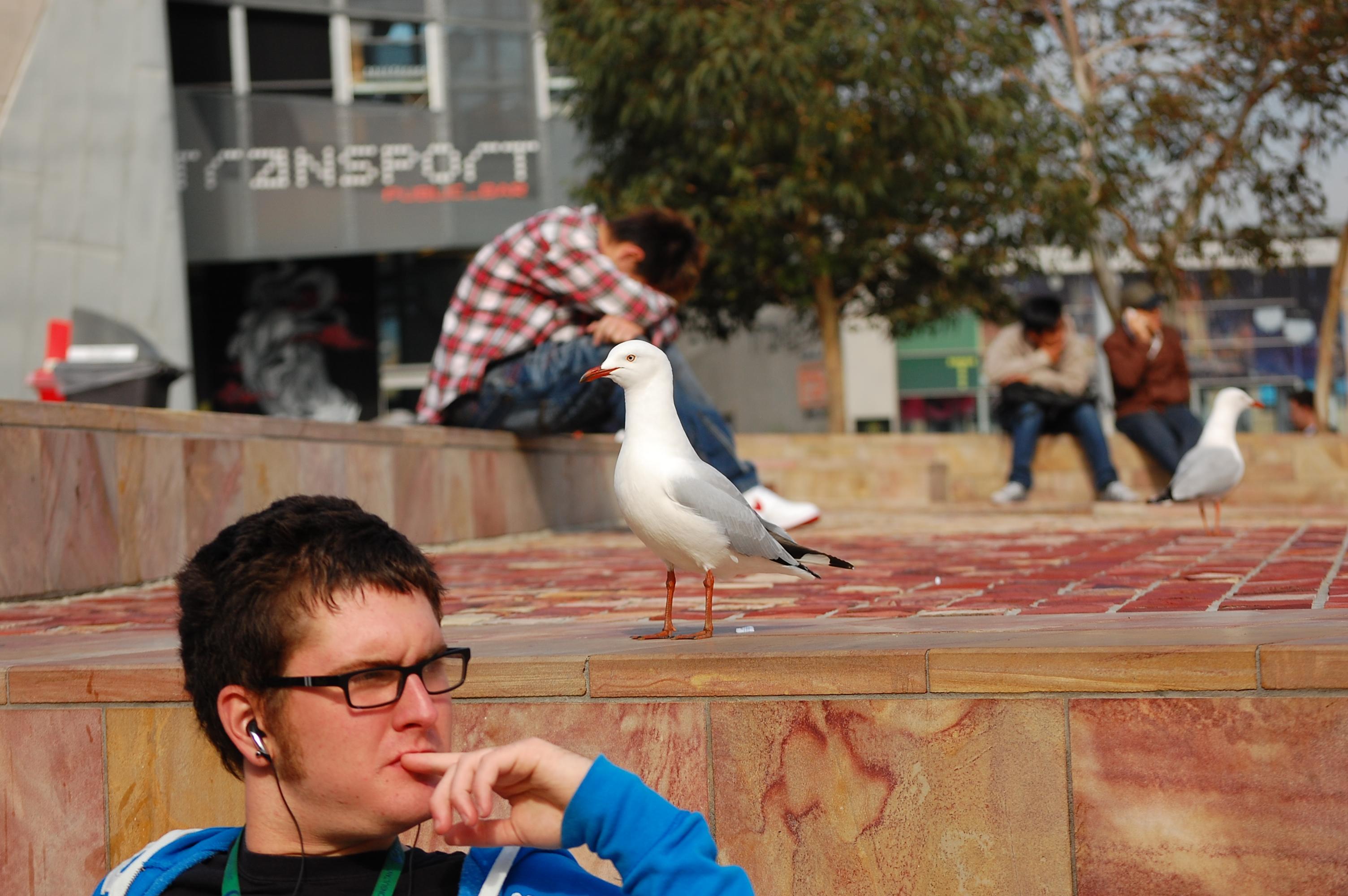 Hipster & gull, Melbourne
